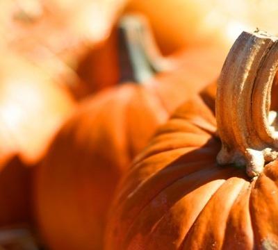 Pumpkin Recipes!