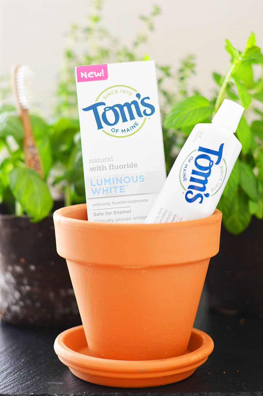 April is Earth Month & I'm Upcycling Bamboo Toothbrushes! @TomsofMaine @Walmart #MyPearlyWhites #LuminousWhites