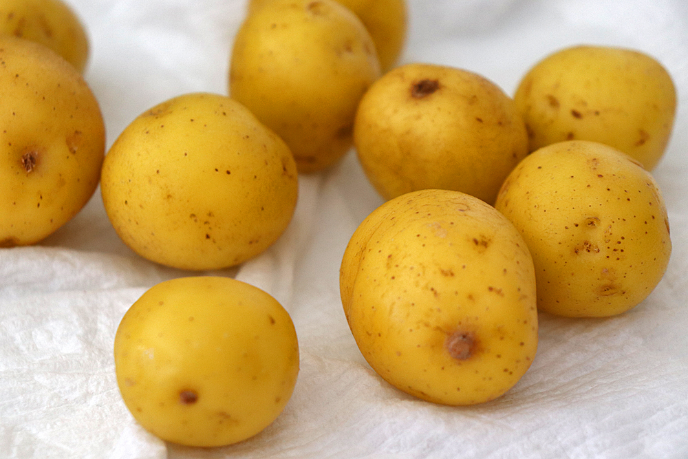 Dry potatoes on paper towels for Oven Roasted Baby Dutch Potatoes Recipe
